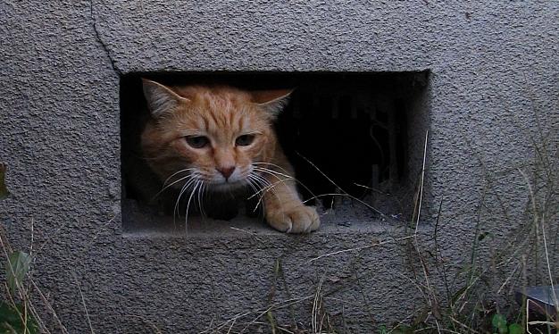 すべての猫にご飯と寝床を!